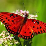 Nature Jigsaw Puzzle – Butterfly